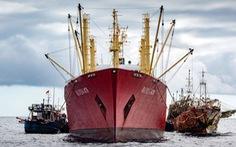 Săn lùng các đội tàu sát thủ đại dương - Kỳ cuối: Mafia đại dương