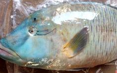 Những người thích 'ăn vật lạ' kích thích tàn phá môi trường biển