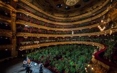 Buổi diễn có một không hai: hòa nhạc cho hơn 2.200 cây xanh nghe