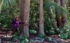 Tỉnh ủy Bà Rịa - Vũng Tàu: Côn Đảo 'không được phép chặt bất cứ cây dầu nào'