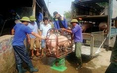 Vào chợ lợn lớn nhất miền Bắc