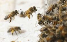 Bị ong đốt, bé 2 tuổi tử vong, bé 5 tuổi nguy kịch