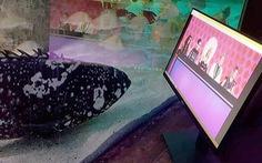 Cá ở thủy cung xem tivi 'giết thời gian' mùa COVID-19
