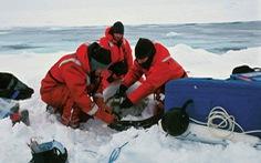 Các nước giảm nghiên cứu ở Nam Cực để ngăn virus corona 'đột nhập'