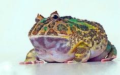 Phát hiện hóa thạch ếch sống cách đây 2 triệu năm ở Argentina