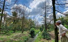 Nhà vườn lao đao vượt  khó - Kỳ 1: Ngập nỗi lo ở 'thủ phủ' trái cây