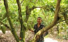 Nhà vườn lao đao vượt khó - Kỳ 4: Liên kết để làm giàu