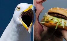 Người đàn ông cắn chim hải âu vì bị cướp bánh McDonald