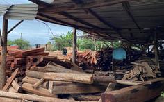 Tạm giam chủ công ty chế biến gỗ chứa gần 200m3 gỗ lậu