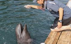 Cá hiếm lai giữa cá voi và cá heo
