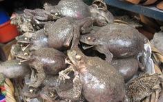 Đi chợ 'chuyên doanh' bùa: xác cóc ếch khô, nhau thai khô, công thức 'kích thích'...