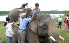 Tha cho voi, ngắm thôi là đủ!