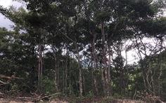 Thủ tướng yêu cầu chủ tịch tỉnh báo cáo vụ 'chuẩn bị phá rừng dầu Côn Đảo'