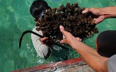 San hô dưới biển cũng không yên