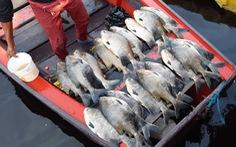 Cá tại khu vực Amazon của Brazil có hàm lượng thủy ngân cao nguy hiểm
