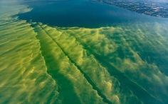 Hồ núi tại Mỹ chuyển màu do tảo diệp lục xâm lấn