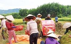 Xúc động cảnh hàng xóm chung tay gặt lúa giúp gia đình bị cách ly tập trung
