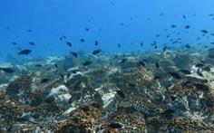 Hệ sinh thái đại dương 'đang bên bờ vực sụp đổ' do nước biển ấm lên