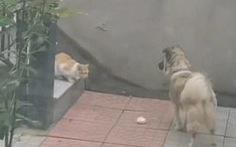Clip xúc động: chú chó nhà tha thức ăn chia cho mèo hoang nhỏ