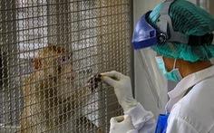 Thái Lan thử thành công vaccine ngừa COVID-19 trên khỉ, chuột
