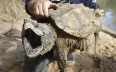 Bí ẩn loài rùa có cú cắn mạnh gấp 6 lần cá mập