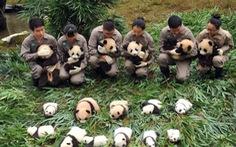 Lo cứu gấu trúc, Trung Quốc bỏ lơ loài khác