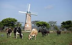 Hệ thống trang trại bò sữa Vinamilk tăng trưởng ấn tượng