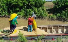 Gạo Việt có lợi thế cạnh tranh rất lớn