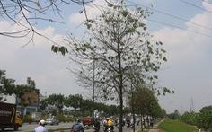 Bà con vui bụng dạ khi thấy hàng cây xanh đường Phạm Văn Đồng 'hồi sinh'