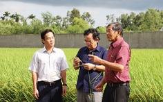 Gạo Việt đừng mải mê sản lượng