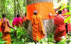 Quy y cho cây - hướng tâm trân trọng môi trường