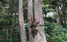 Điều chỉnh dự án hạ tầng tái định cư, giữ rừng dầu đặc hữu Côn Đảo