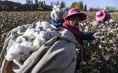 Mỹ hoãn xuất kho bông từ Tân Cương, Việt Nam có bị ảnh hưởng?
