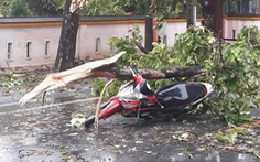 Cây đổ đè chết 1 người, 29 người bị thương do bão số 5