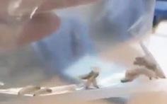 Bắt sống 40 con giòi 'cư ngụ' trong tai người đàn ông ở Quảng Nam