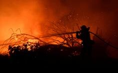 560 công ty hàng đầu thế giới kêu gọi bảo vệ thế giới tự nhiên, chống lại biến đổi khí hậu