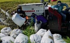 Ngăn nguy cơ đói do COVID-19, Indonesia xây trang trại lớn gấp 10 lần diện tích Singapore