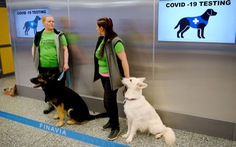 Sân bay ở Phần Lan: dùng chó đánh hơi phát hiện người mắc COVID-19
