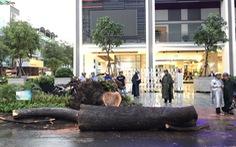 Nạn nhân vụ cây ngã trúng trên đường Nguyễn Tri Phương bị chấn thương nặng
