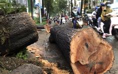 Cơ quan chức năng nói gì về vụ cây ngã đè chết người trên đường Nguyễn Tri Phương?