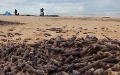 Hàng tấn ốc dạt bờ ở Quảng Bình có thể do bão số 5