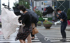 Bão Maysak hướng bán đảo Triều Tiên: người dân trú trong nhà tử vong do gió mạnh