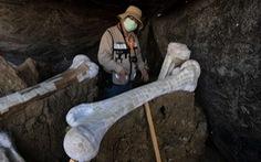 Tìm thấy hơn 200 bộ xương voi ma mút siêu khổng lồ gần nơi xây sân bay