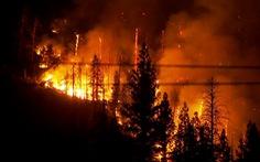 Bang California ban bố tình trạng khẩn cấp tại 5 quận vì cháy rừng