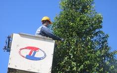 Phun thuốc sinh học 'cứu' cây xanh tại TP.HCM bị sâu ăn lá tấn công