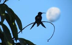 Loài chim kỳ quái khi ngủ tự giảm thân nhiệt 30 độ