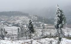 Trâu, bò chết rét do mưa tuyết, băng giá