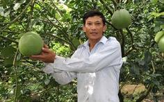 Trái cây miền Tây sẵn sàng ra chợ tết