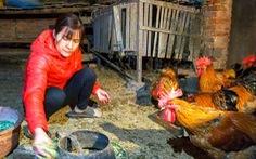 Nông dân Hưng Yên hào hứng chăn nuôi