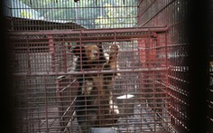 Chuyên gia Pháp: Việt Nam có nguy cơ cao lây bệnh truyền nhiễm từ động vật